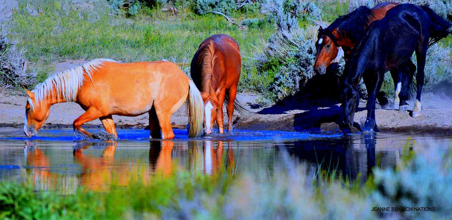 Water Photograph - wild Palomino stallion of the Great Basin Country  by Jeanne  Bencich-Nations