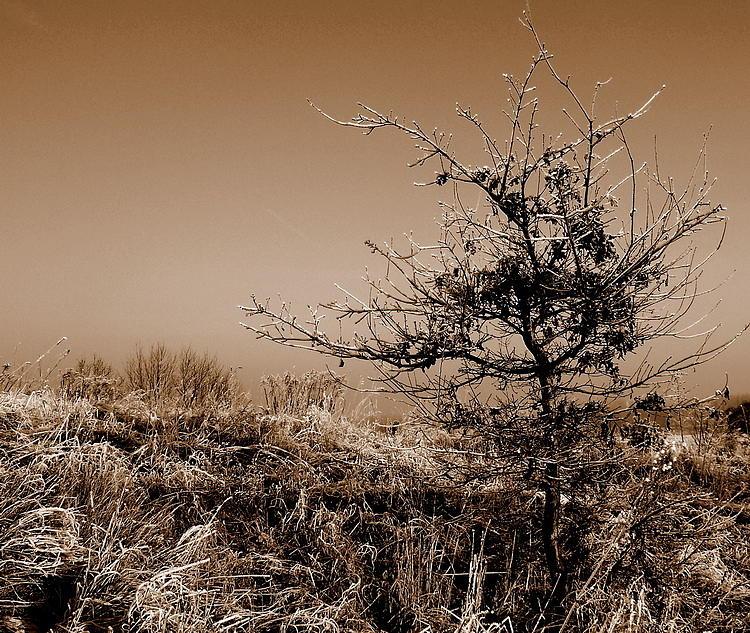 Landscape Photograph - Wild Pear by Mieczyslaw Wojtkowski