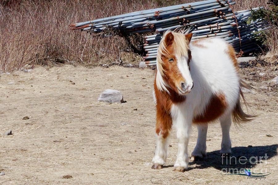 Wild Pony Photograph