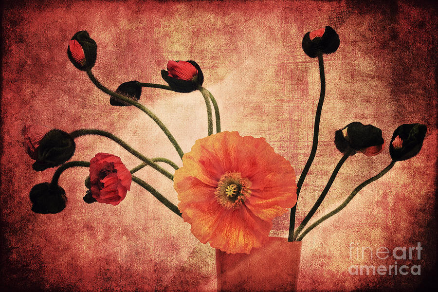 Poppies Photograph - Wild Poppies by Angela Doelling AD DESIGN Photo and PhotoArt
