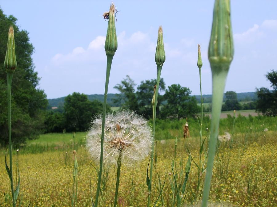 Grass Photograph - Wild Praire by Ali Dover