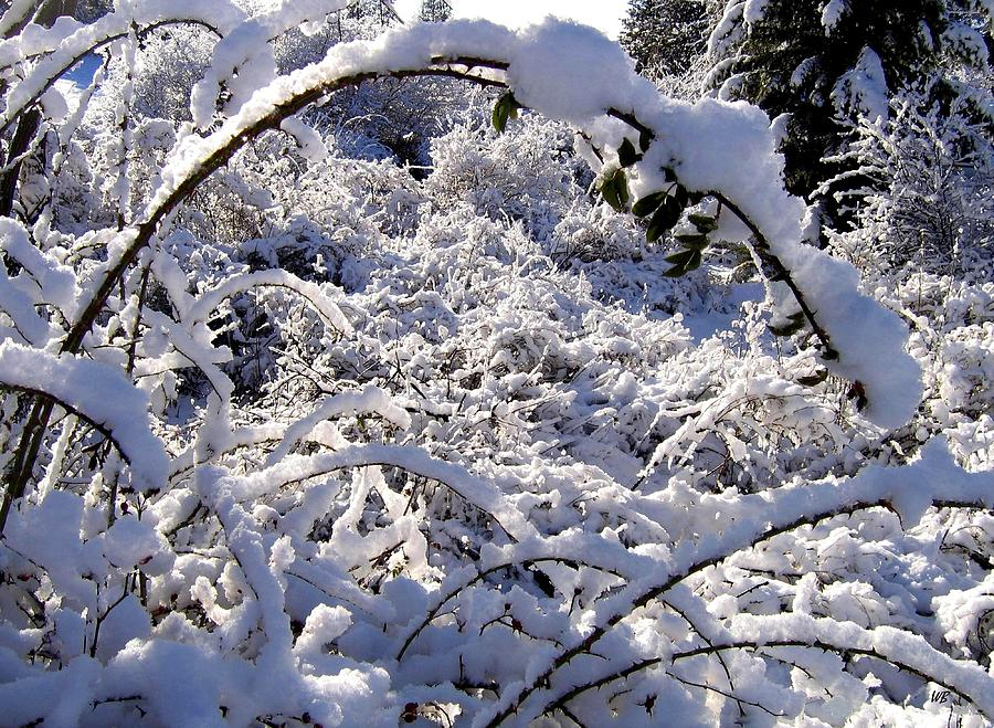 Snow Photograph - Wild Rose Arch by Will Borden