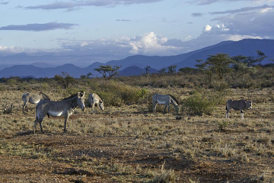 Africa Photograph - Wild Samburu by Michele Burgess