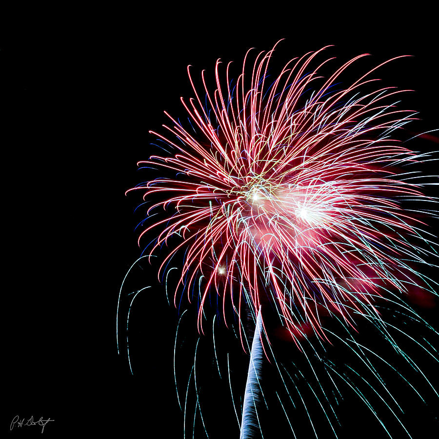 July 4th Photograph - Wild Sky Flower by Phill Doherty