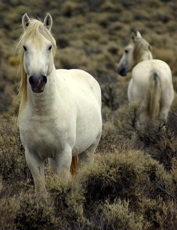 Wild Horses Photograph - Wild Stallion by Marty Koch