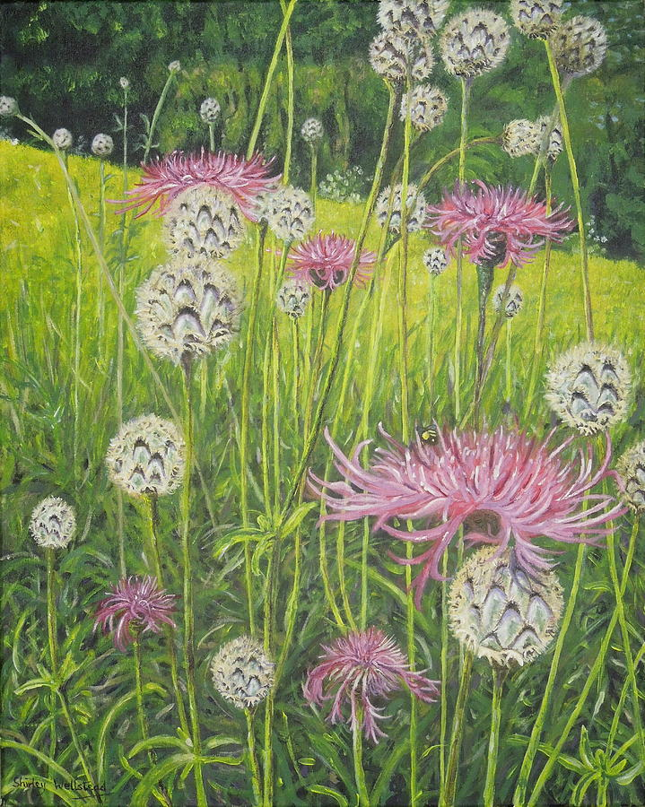 Wild Thistles by Shirley Wellstead