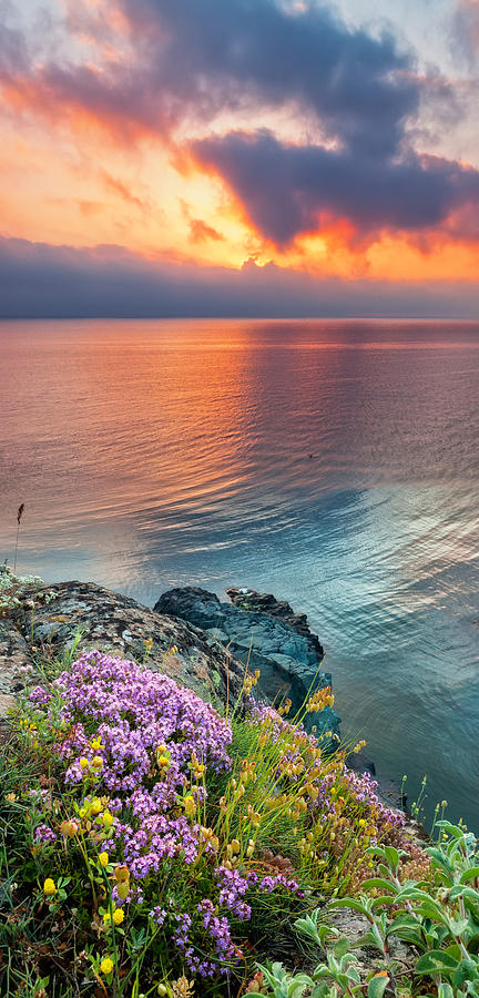 Flowers Photograph - Wild Thyme By The Sea by Evgeni Dinev