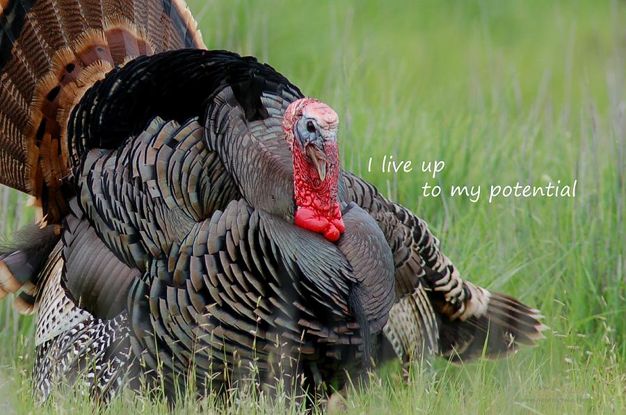 Wild Turkey said I Live Up to my Potential Photograph by Sherry Clark