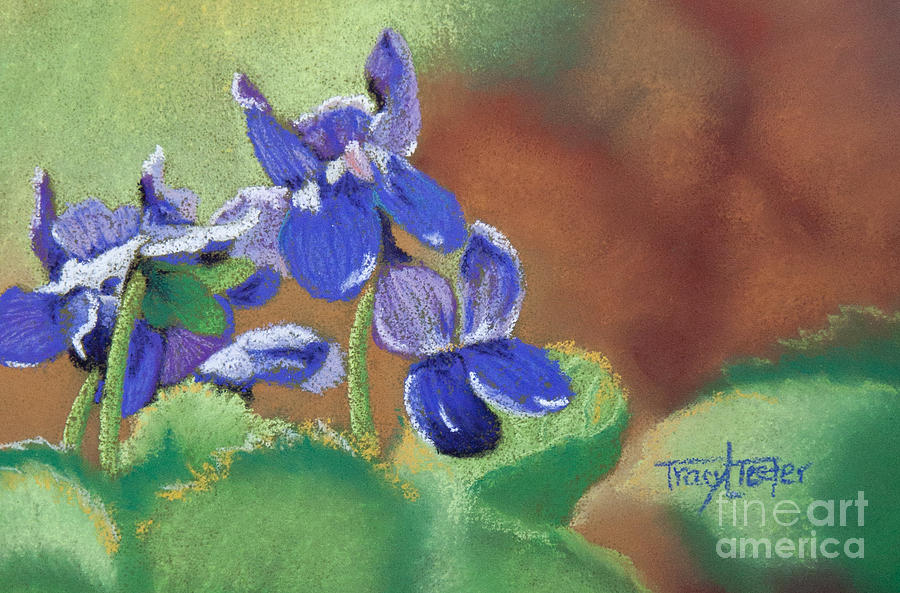 Violets Pastel - Wild Violets by Tracy L Teeter