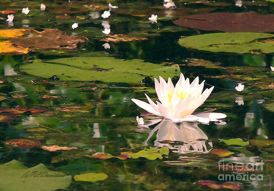 Water Lilly Photograph - Wild Water Lilly by Patricia L Davidson