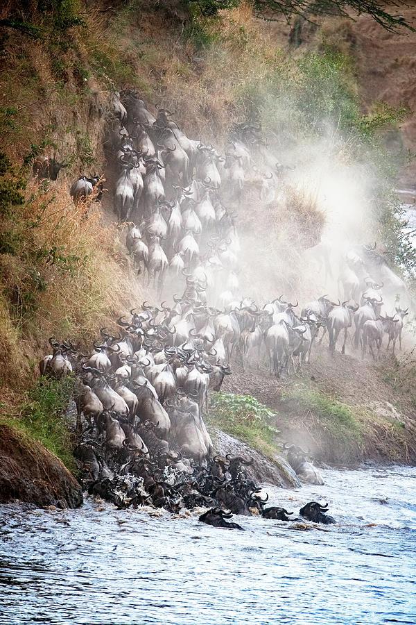 Mara Photograph - Wildebeest Climbing Up Mara River Bank by Susan Schmitz