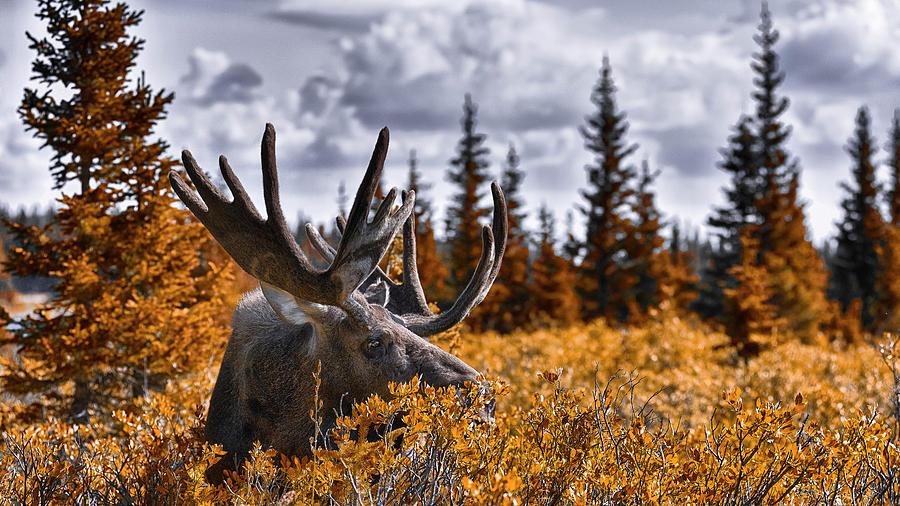 Wilderness Photograph - Wilderness by Garett Gabriel