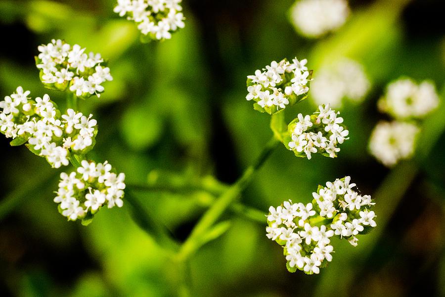 Flowers Photograph - Wildflower - 3 by Barry Jones