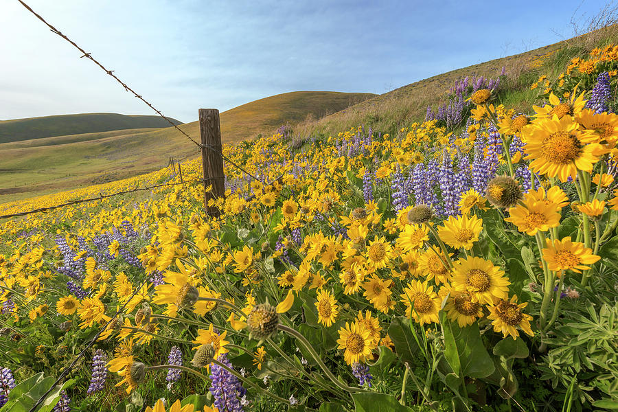 Wildflower Bonanza by Jon Ares