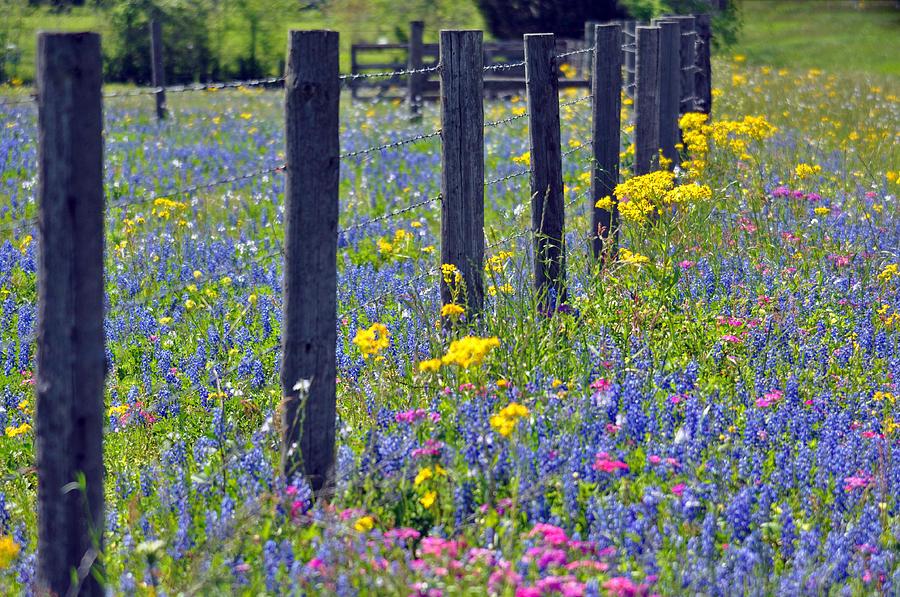 Blanton Photograph - Wildflower Fenceline by Teresa Blanton