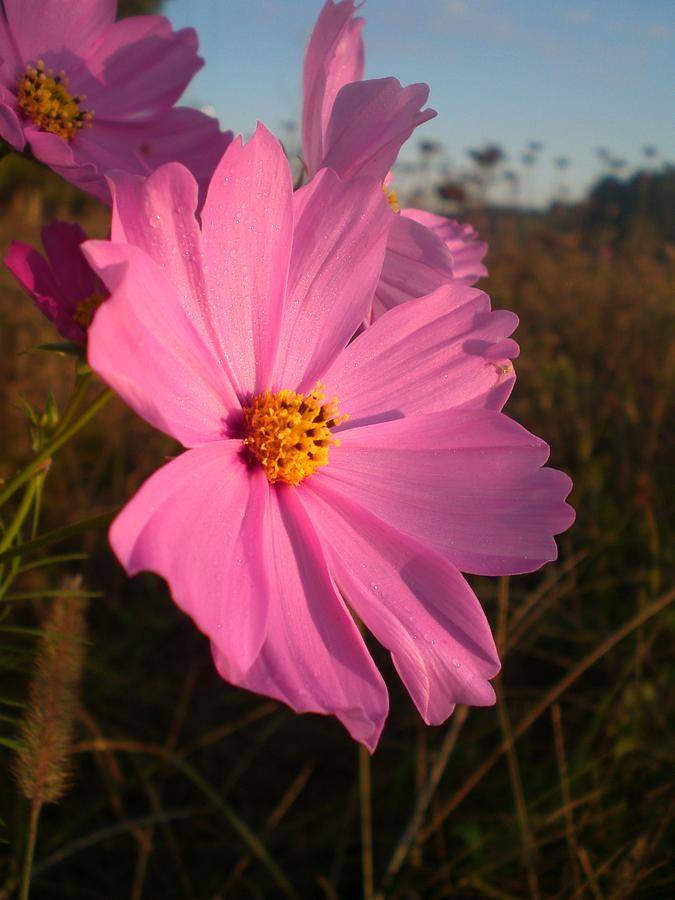 Wildflower Photograph - Wildflower Greeting The Day II by Wendy Robertson