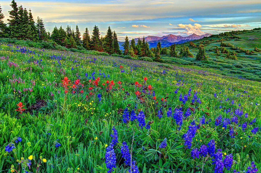 View Photograph - Wildflower Hill by Scott Mahon