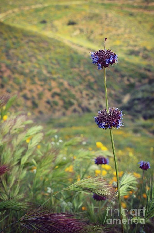 Wildflower Photograph - Wildflower by Kiana Carr