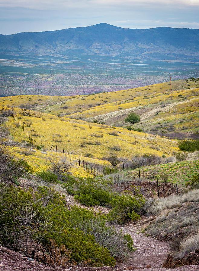 Wildflower Meadows by Karen Stephenson