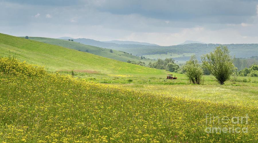 Wildflower Meadows, Transylvania by Perry Rodriguez