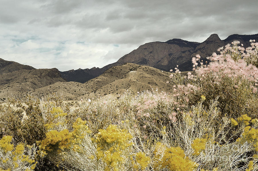 Sandia Mountains Photograph - Wildflower Mountain by Andrea Hazel Ihlefeld