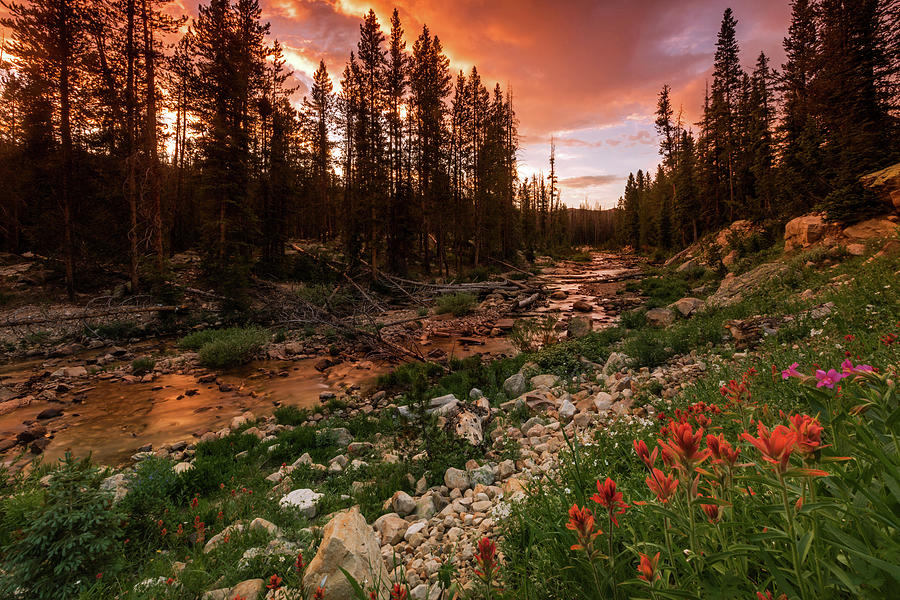 Provo River Photograph - Wildflowers Along The Provo River. by Johnny Adolphson