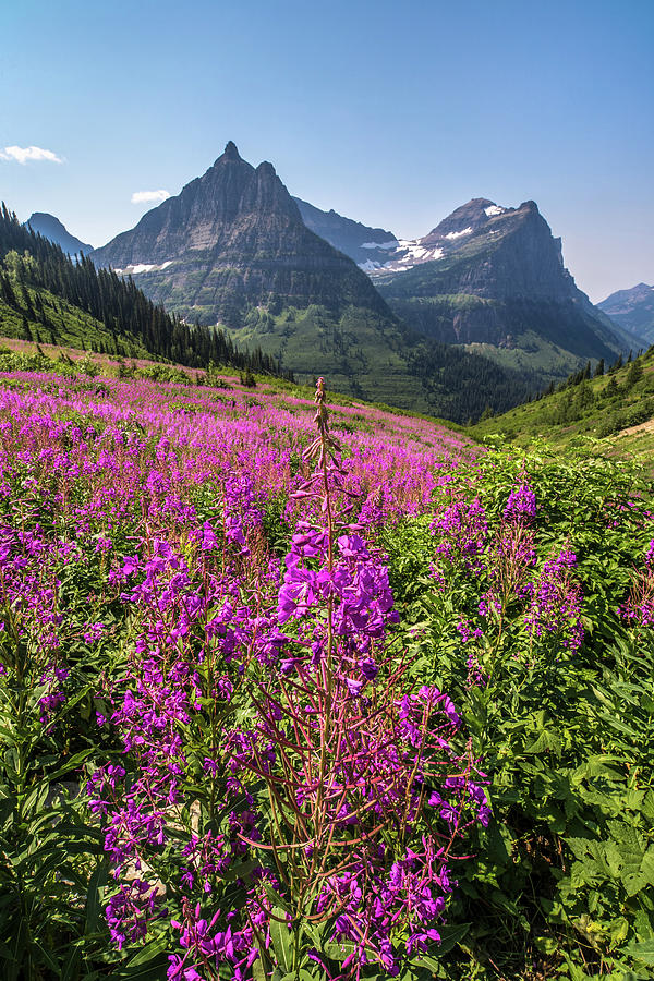 Glacier Photograph - Wildflowers And A Glacier by Peter Tellone