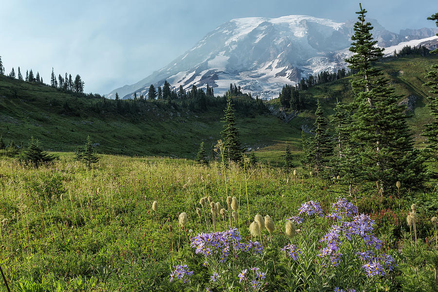 Wildflowers and Mount Rainier by Belinda Greb