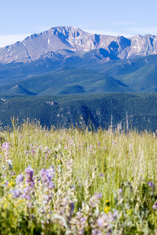 Wildflowers And Pikes Peak In The Pike National Forest Photograph