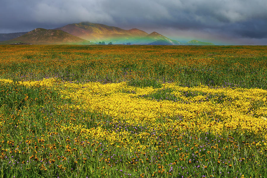 Wildflowers and Rainbow on the Carrizo Plain by Rick Pisio