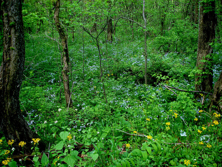 Spring Photograph - Wildflowers And Woods by Martin Morehead