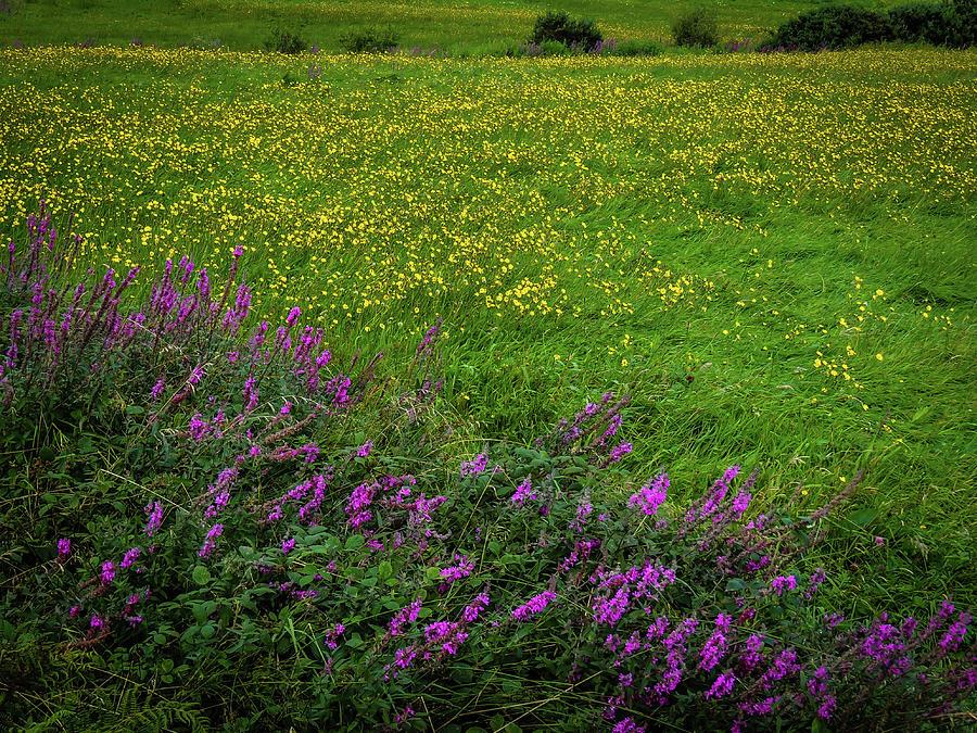 Ireland Photograph - Wildflowers In An Irish Field by James Truett