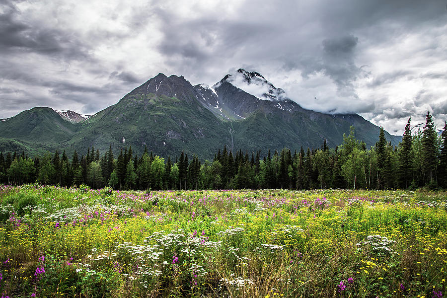 Wildflowers Photograph - Wildflowers In Palmer by Carrie Olier