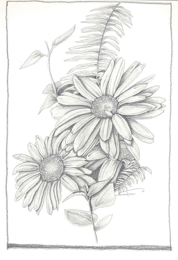 Wildflower Line Drawing : Wildflowers drawing by kristen stevenson
