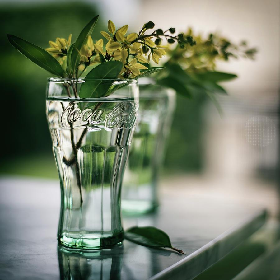 wildflowers  by Laura Fasulo