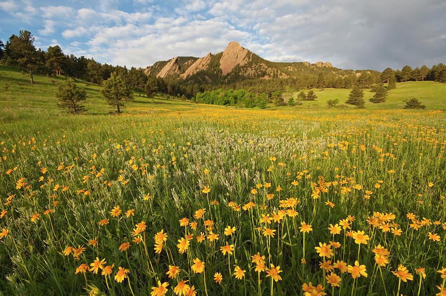 Horizontal Photograph - Wildflowers by Lightvision
