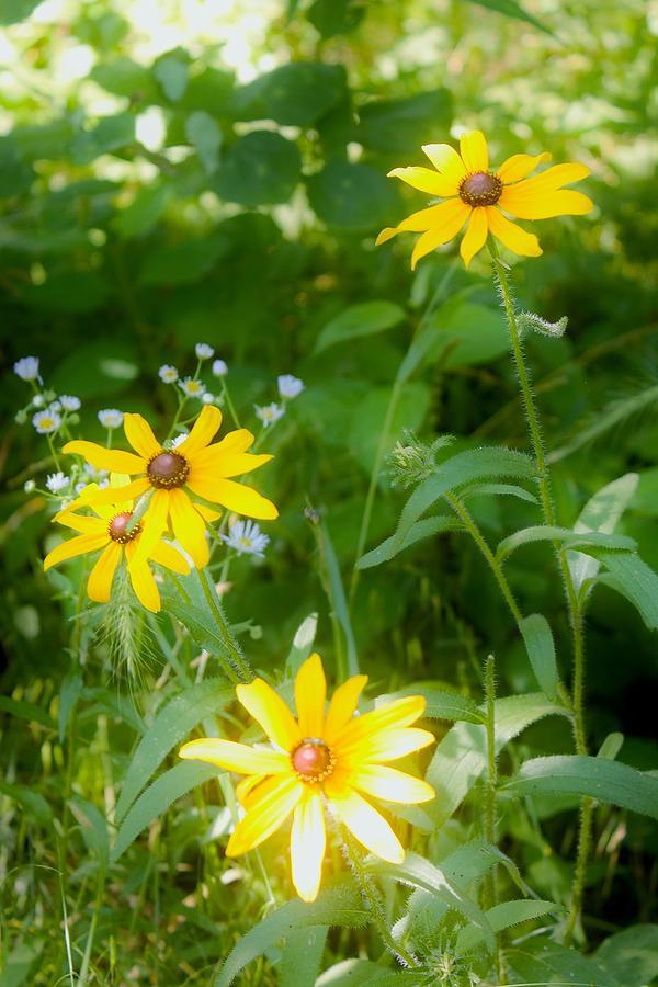 Flowers Photograph - Wildflowers by Lori  Burke