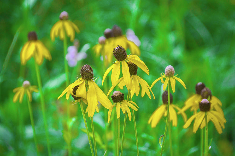 Wildflower Photograph - Wildflowers Of Yellow by Bill Pevlor