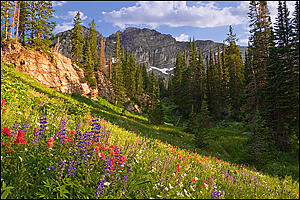 Wildflowers Photograph - Wildflowers by Douglas Pulsipher