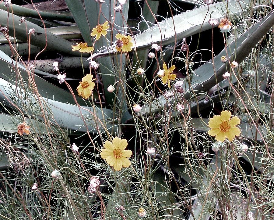 Flowers Photograph - Wildflowers by Wayne Potrafka