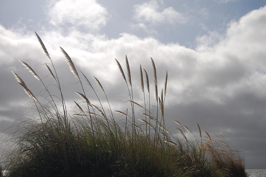Clouds Photograph - Wildgrass by Jean Booth