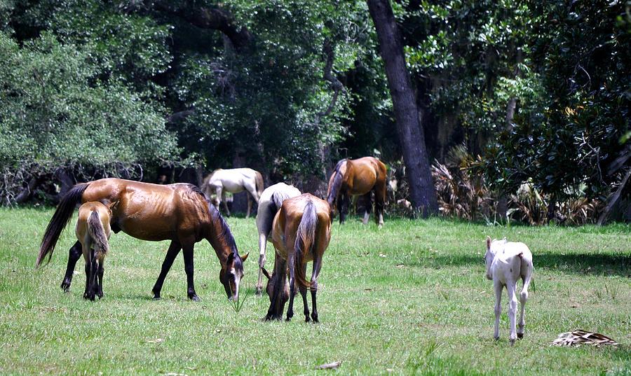 Cumberland Island Photograph - Wildhorses Of Cumberland by Debra White