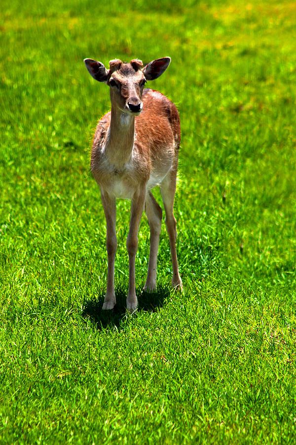 Grass Photograph - Wildlife 2 by Ingrid Glover