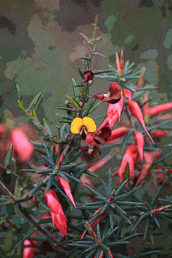 Wildflower Photograph - Wilflowers by Robert Jenner