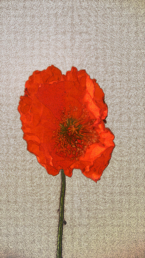Poppy Photograph - Will The Poppy In The Back Please Stand Up by Bobbie Barth