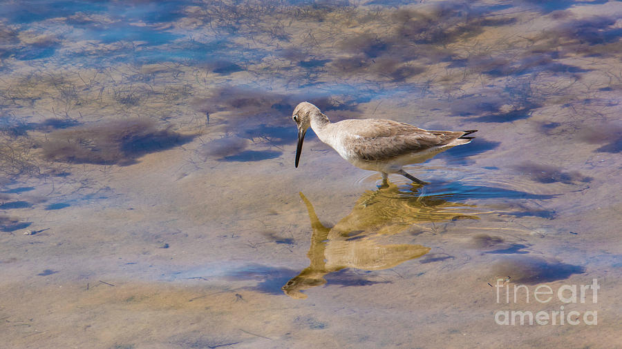 Willet No.1 by John Greco