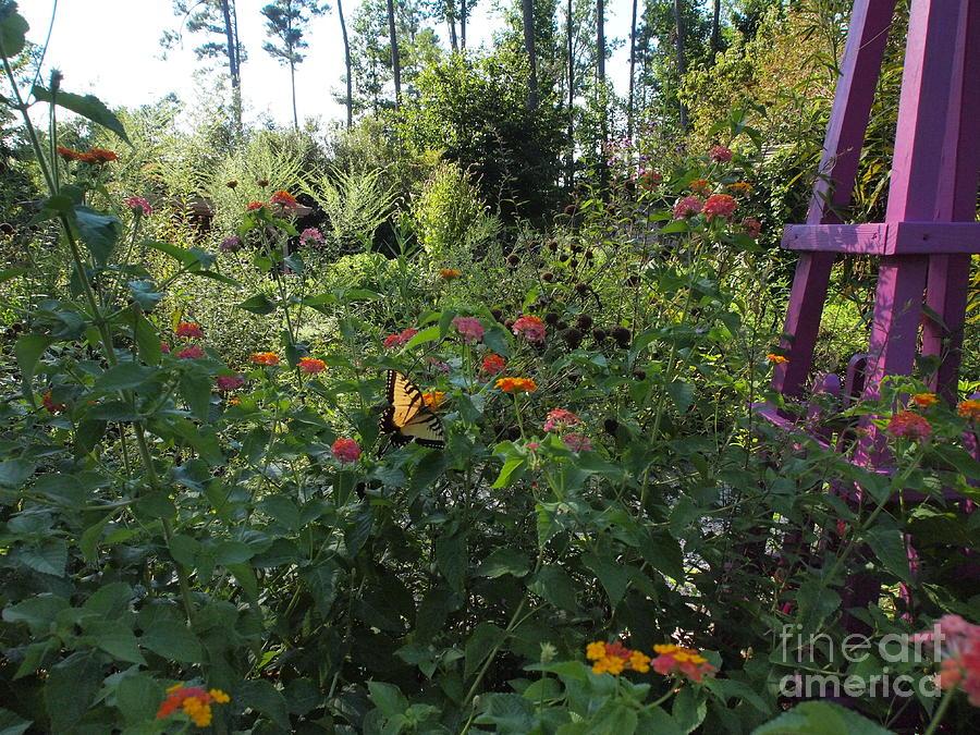 Williamsburg Botanical Garden Hours Garden Ftempo