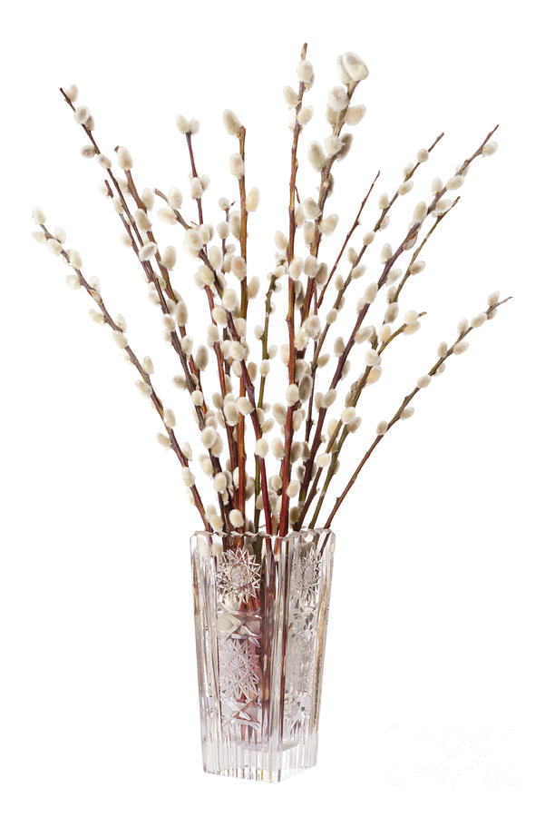 Willow Bouquet With Pussy Willows In Glass Vase Photograph By Peter