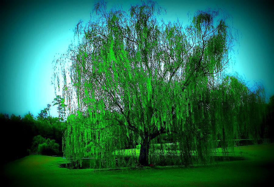 Willow Photograph - Willow In Dreams by Jill Tennison