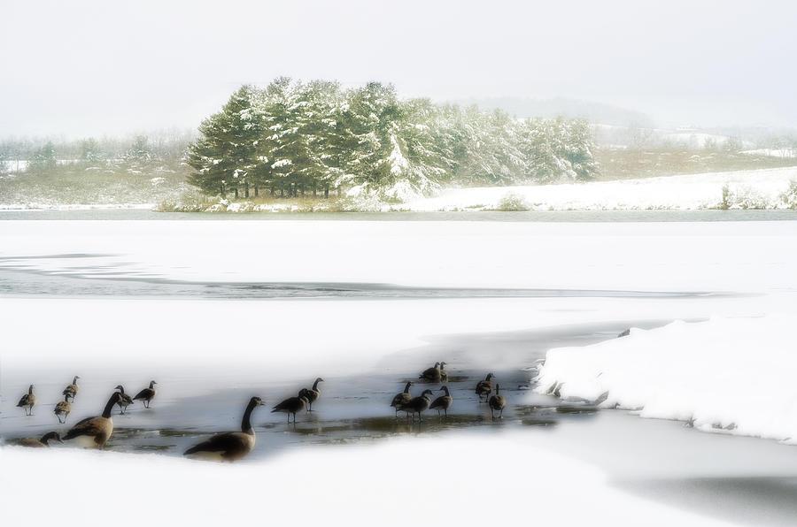 Lake Photograph - Willow Lake Geese by Kathy Jennings